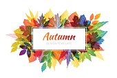 Autumn colorful background with various leaves