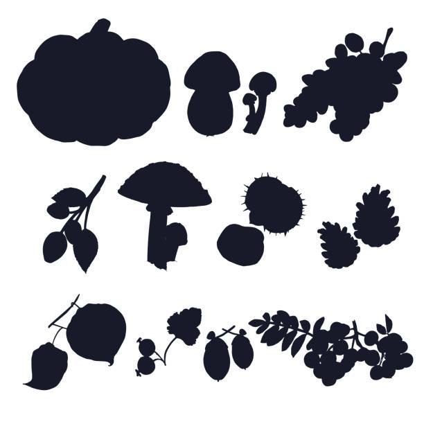 bildbanksillustrationer, clip art samt tecknat material och ikoner med höstens skörd vektor silhuetter. - höst plocka svamp