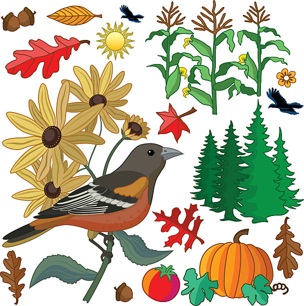 Autumn design elements with Baltimore oriole and black eyed susans vector art illustration