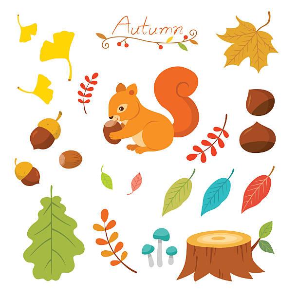 illustrations, cliparts, dessins animés et icônes de ensemble d'éléments de l'automne - écureui