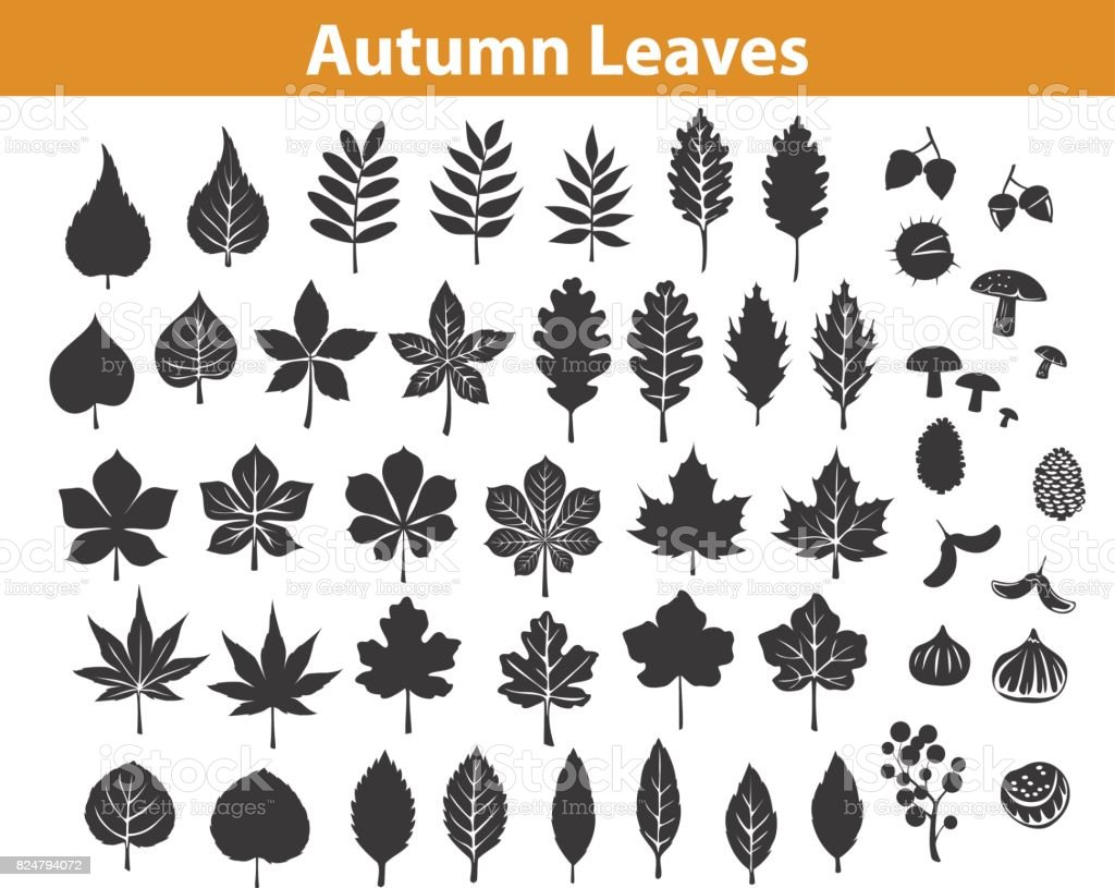 autumn fall leaves silhouettes set in black color, maple chestnut ash oak birch gum beech walnut rowan elm trees foliage. leafs are included as art brushes in library vector art illustration