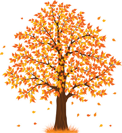 autumn fall tree