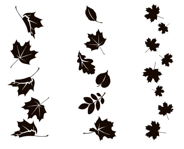 Autumn falling leaves. Vector silhouette of maple, oak, rowan and other leaves. Set of autumn decorations. oak leaf stock illustrations