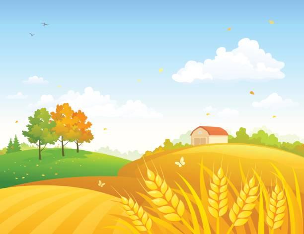 autumn farmland - corn field stock illustrations, clip art, cartoons, & icons