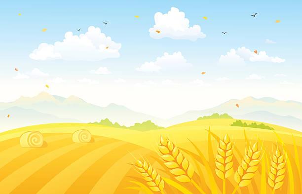 ilustrações, clipart, desenhos animados e ícones de fundo outono campos - corn farm