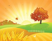 Vector illustration of a beautiful autumn wheat field and bright foliage tree.