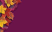 Autumn floral background with colorful silhouettes of tree leaves on yellow background, design elements for the fall season banner, poster, flyer or thanksgiving greeting card, vector illustration