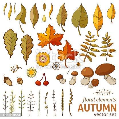 Autumn floral elements, vector set