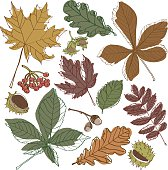 Autumn foliage herbarium chestnut nuts set