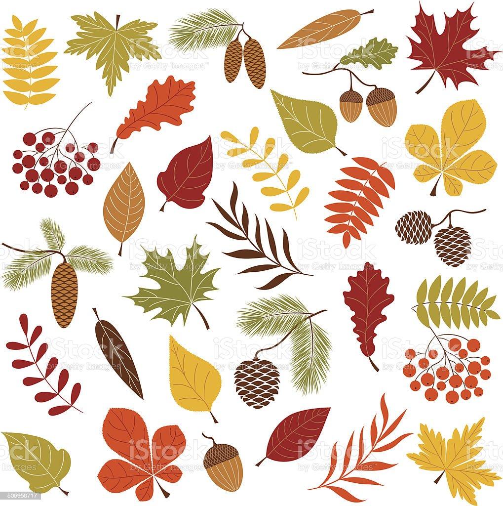 Autumn forest vector art illustration