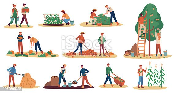 Autumn harvest. Farm workers gathering crops ripe vegetables, picking fruits and berries, remove leaves, season agriculture vector set