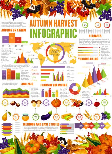 herbst ernte saison vektor infografik - herbstgemüseanbau stock-grafiken, -clipart, -cartoons und -symbole