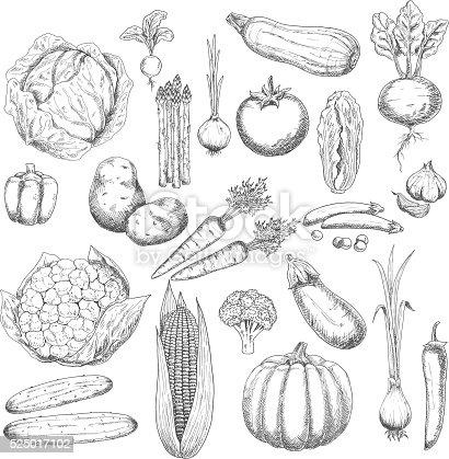 istock Autumn harvest sketch symbol with fresh vegetables 525017102