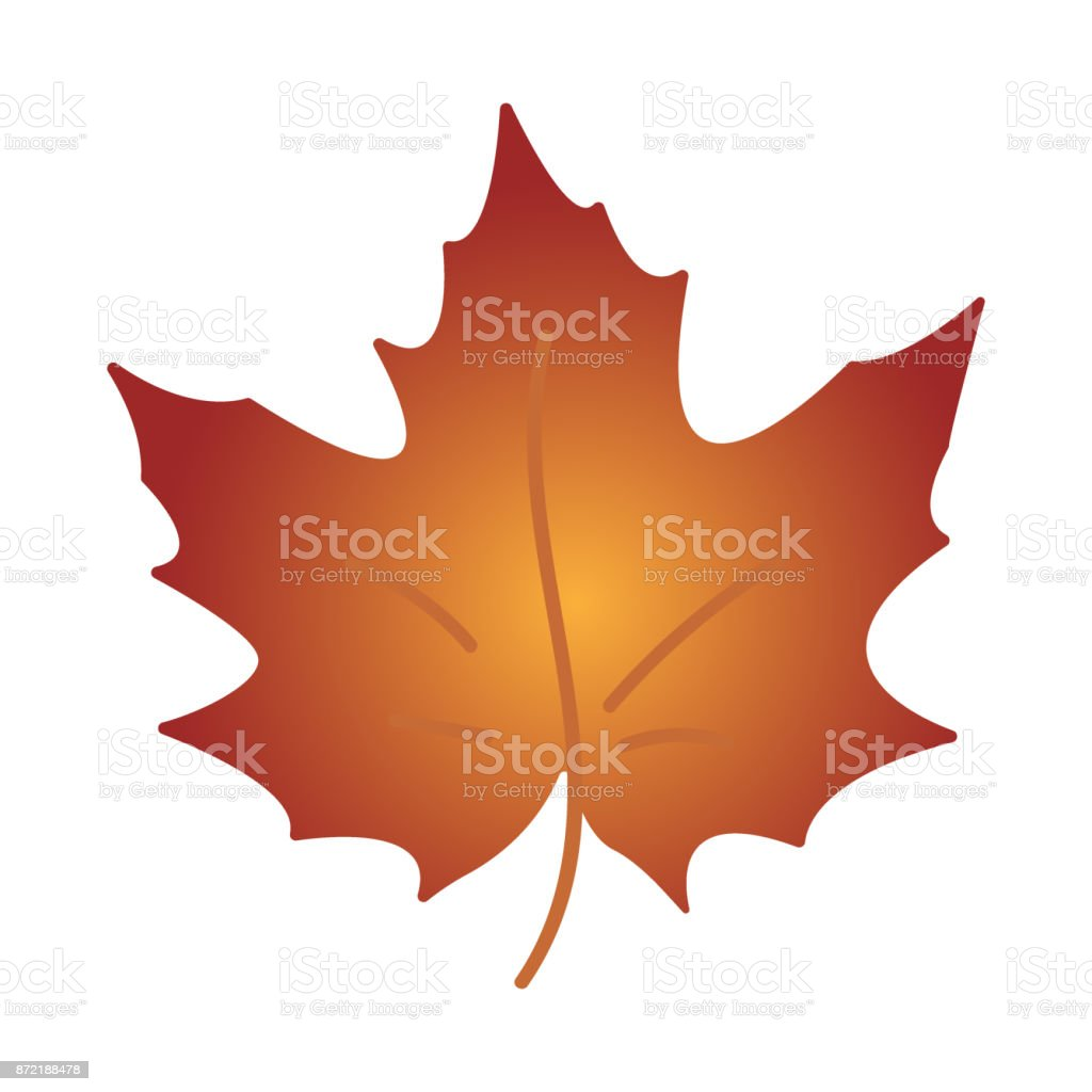 Autumn leaf. Autumn maple leaf isolated on a white background vector art illustration