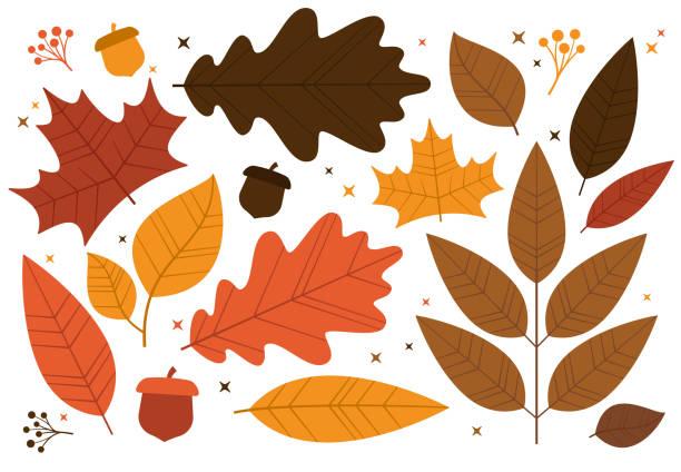 stockillustraties, clipart, cartoons en iconen met herfstblad ontwerpelementen - japanse vallende bladeren