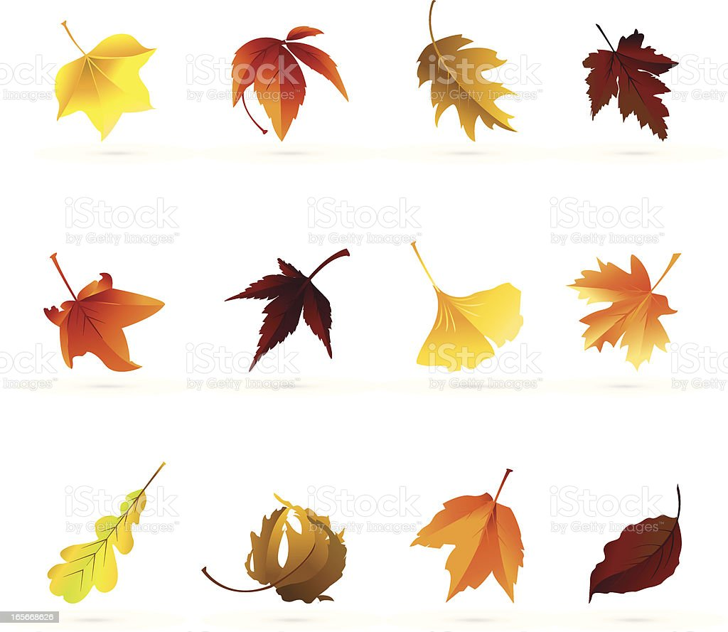 Autumn Leaf Icons vector art illustration