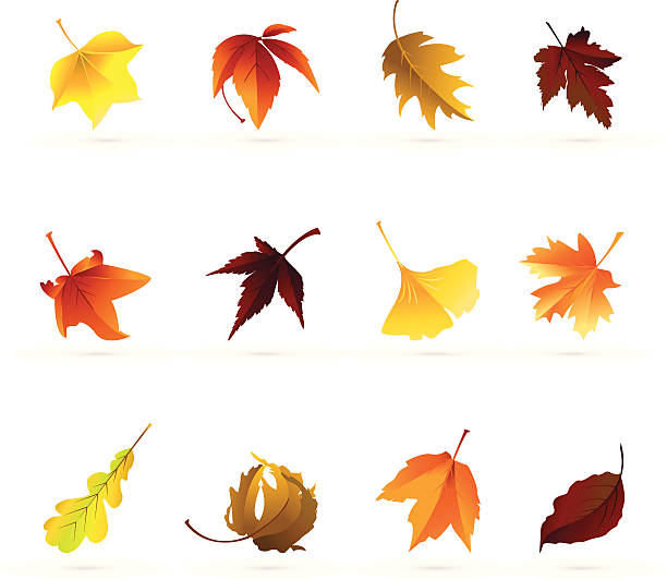 Autumn Leaf Icons http://www.cumulocreative.com/istock/File Types.jpg autumn leaf color stock illustrations