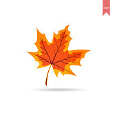 Maple Leaf is Subtropical Leaf, The maple leaf is the characteristic leaf of the maple tree