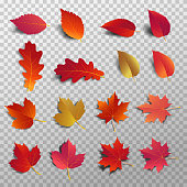 istock Autumn leaf pack. Realistic leave fall with shadow. Maple leaf for decorate promotion banner and printing design. Vector illustration. 1043797098