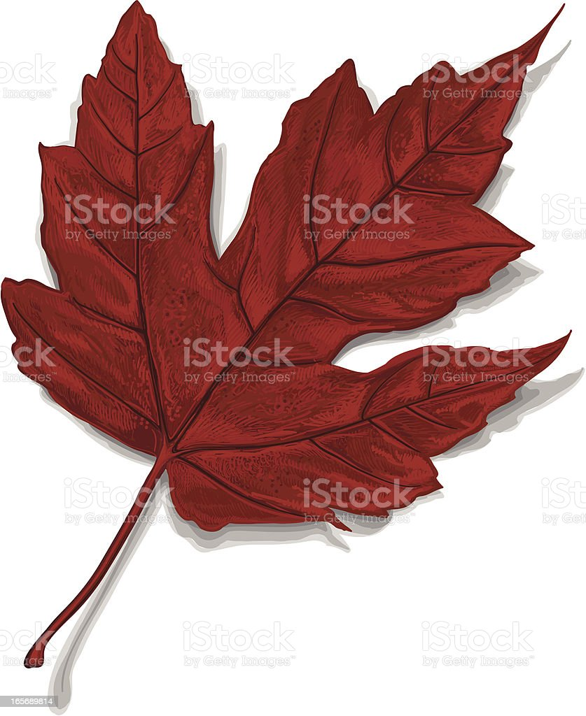 Autumn leaf ( Vector ) royalty-free autumn leaf stock vector art & more images of autumn