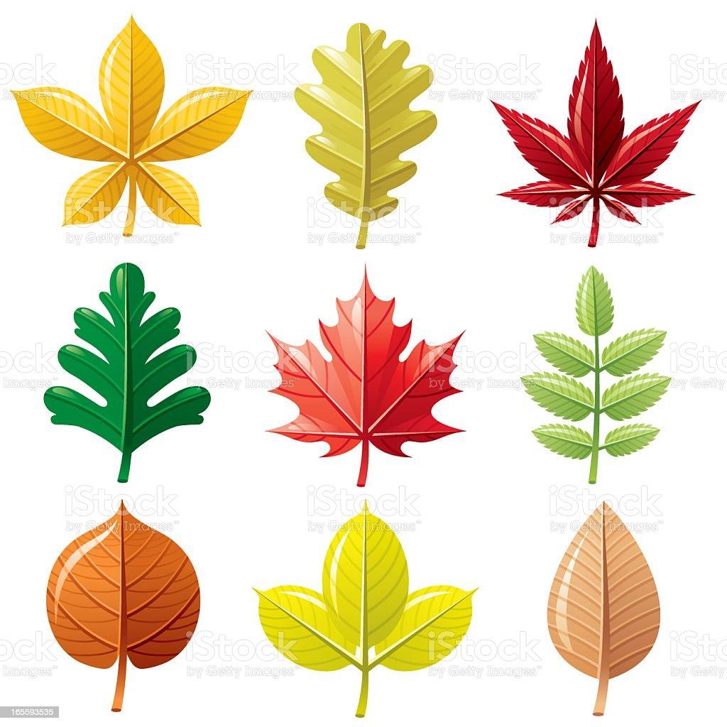 Autumn leafs icon set vector art illustration