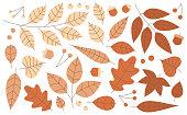 Autumn fall leaves orange gradient berries and acorns line flat design drawing.