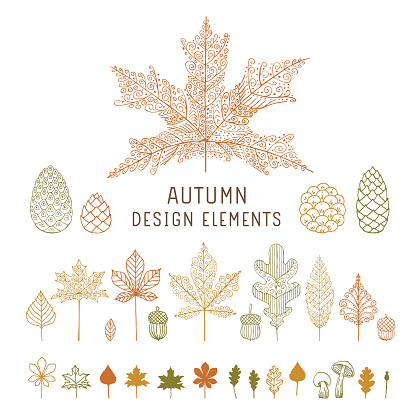 Autumn Leaves And Cones Stock Illustration - Download Image Now