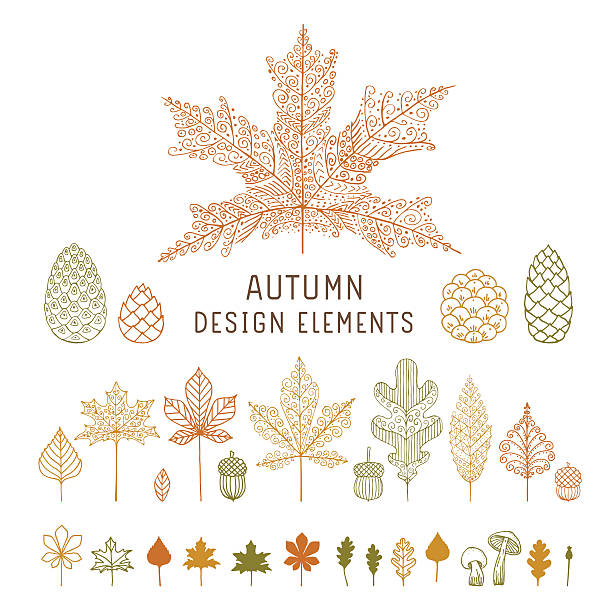 Autumn leaves and cones Editable flat vector design elements on layers. oak leaf stock illustrations