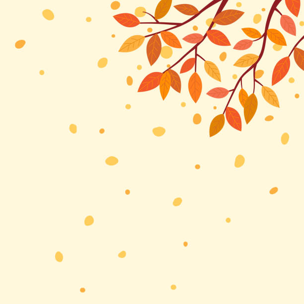 Autumn leaves background Autumn,nature,tree,falling,outdoor,scene, leaves,design,wallpaper,template, background autumn leaf color stock illustrations