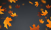 Falling autumn maple leaves background abstract.