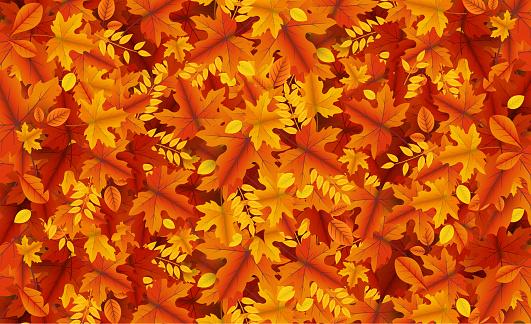 autumn leaves bg