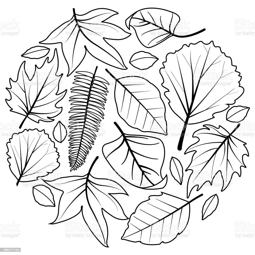 Kleurplaten Herfstbladeren.Herfstbladeren Zwartwit Boekenpagina Kleurplaten Stockvectorkunst En