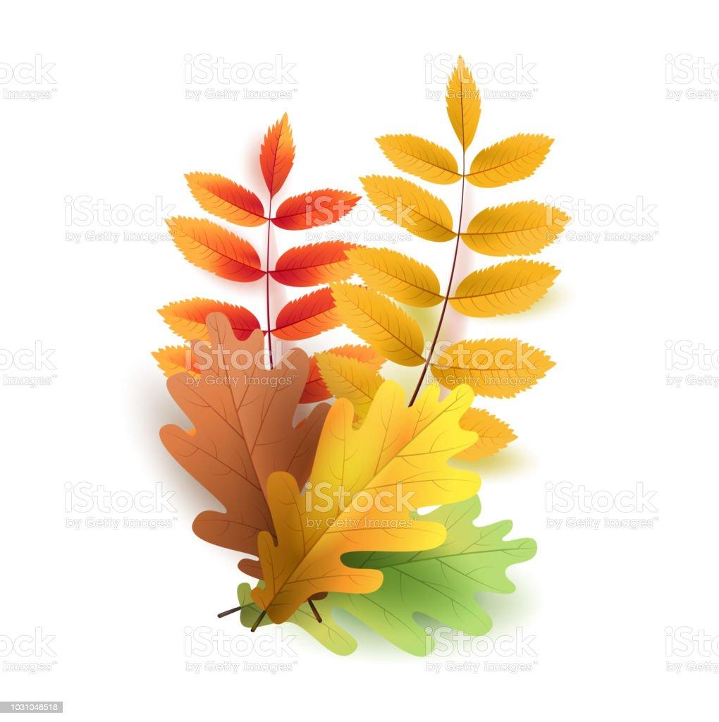 Blätter Im Herbst Leuchtend Bunte Herbst Eichenlaub Vorlage Für ...