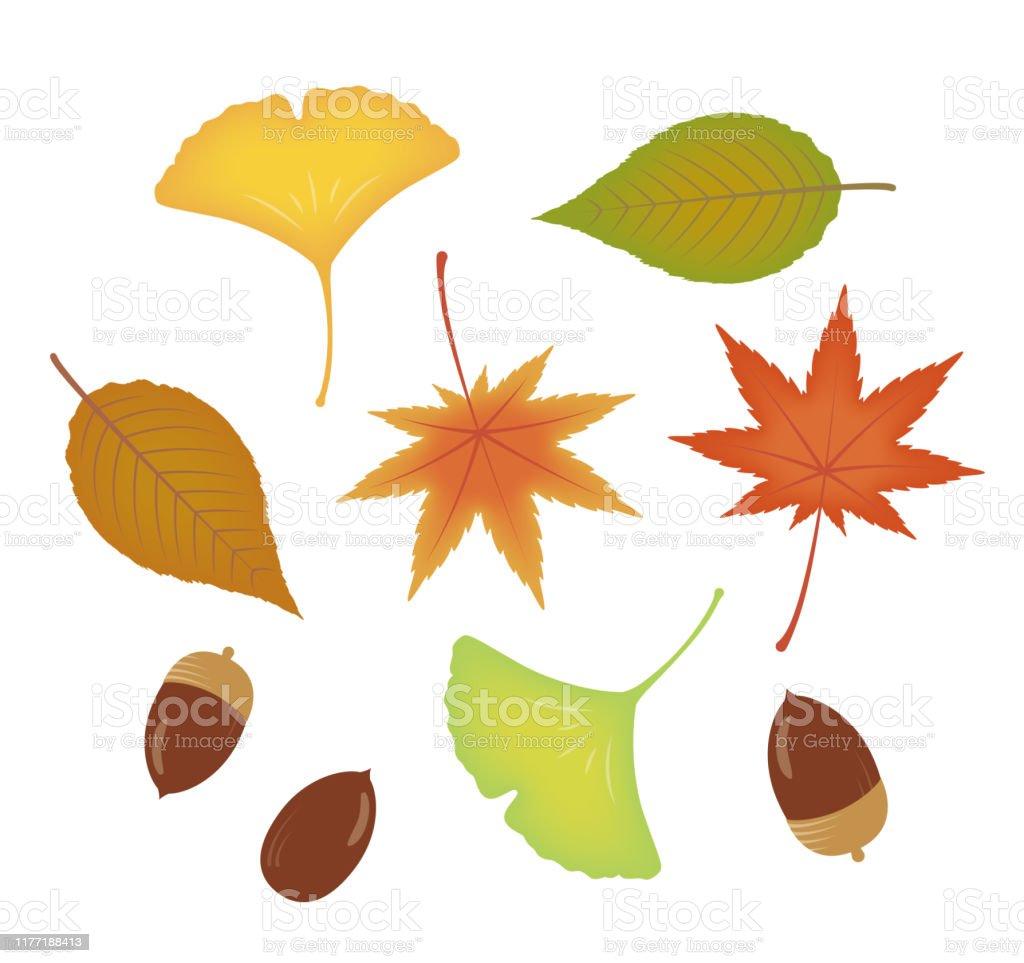 紅葉枯れ葉イチョウの葉落ち葉ドングリ かえでの葉のベクターアート