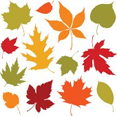 Autumn leaves design elements.  Global colors used and hi res jpeg included Scroll down to see more of my illustrations.