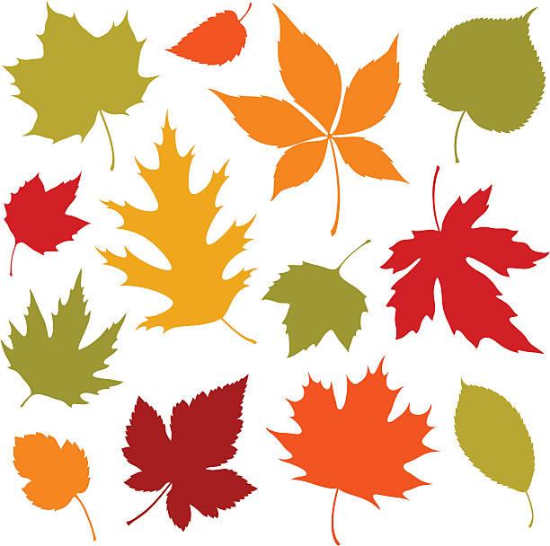 Herbst Blätter-Design-Elemente – Vektorgrafik
