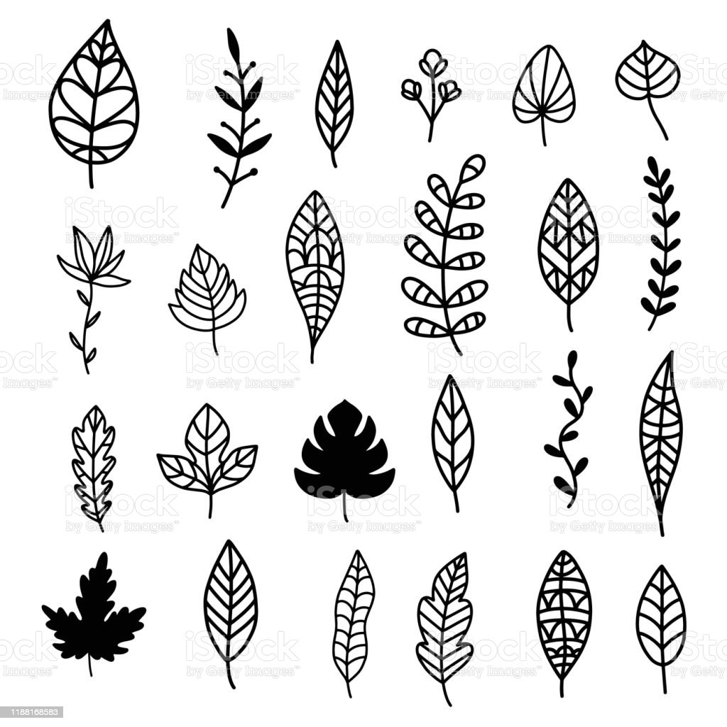 Autumn Leaves Doodle Set Hand Drawn Vector Fall Forest Foliage Stock Illustration Download Image Now Istock