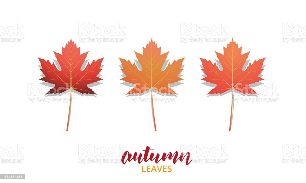 Autumn leaves. Fall leaves design collection for ad, banner, background  etc. Autumn