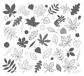 Vectorized hand drawn autumn leaves in black and white