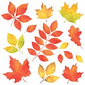 Autumn Leaves in Watercolor.