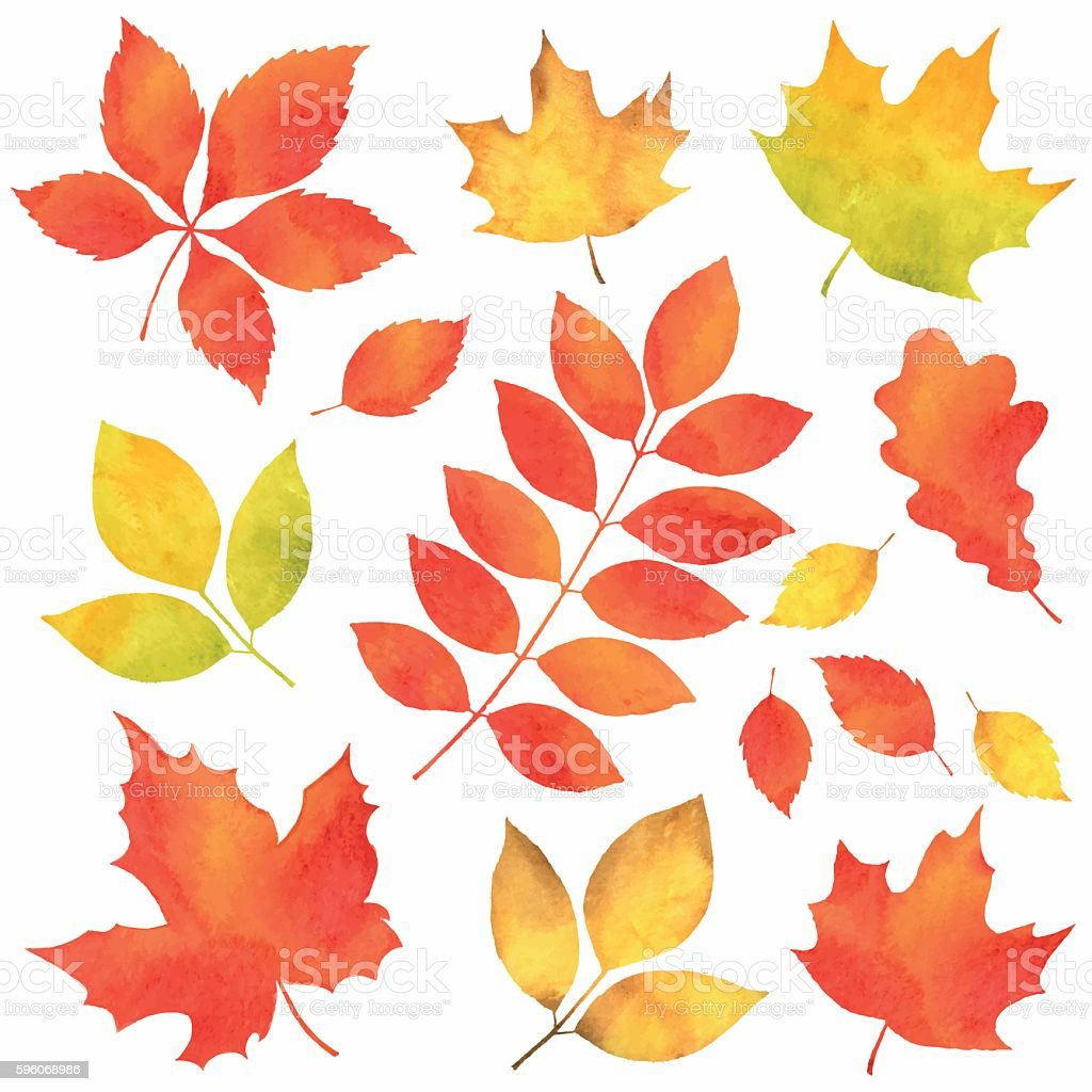 Autumn Leaves in Watercolor vector art illustration