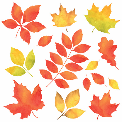 Autumn Leaves In Watercolor Stock Illustration - Download Image Now