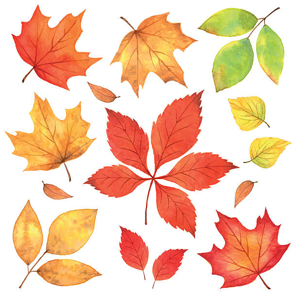 Autumn Leaves in Watercolor Autumn Leaves in Watercolor. fall leaves stock illustrations