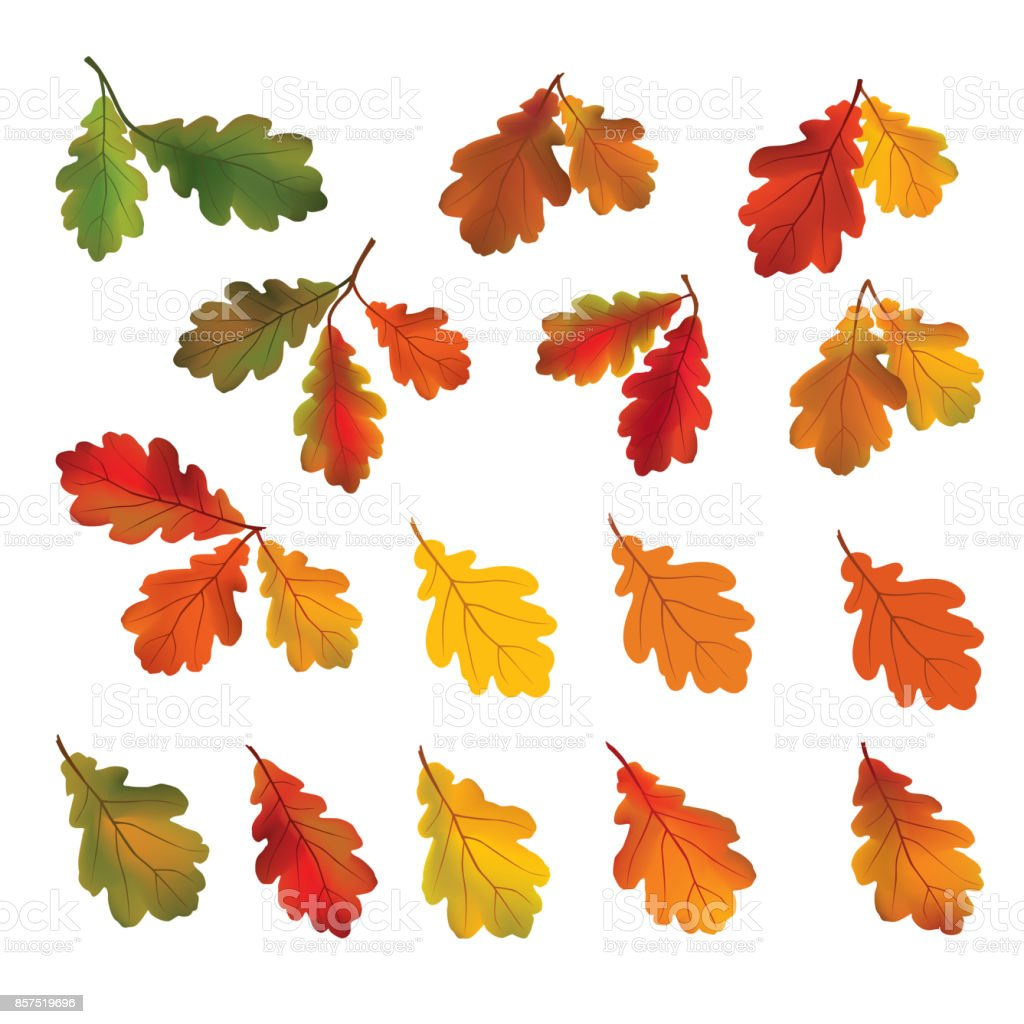 Autumn leaves isolated on white background. Fall icon. Nature de