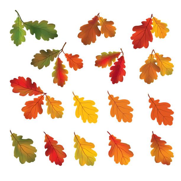 Autumn leaves isolated on white background. Fall icon. Nature de Autumn leaves isolated on white background. Fall icon. Nature decor with oak leaf set. oak leaf stock illustrations
