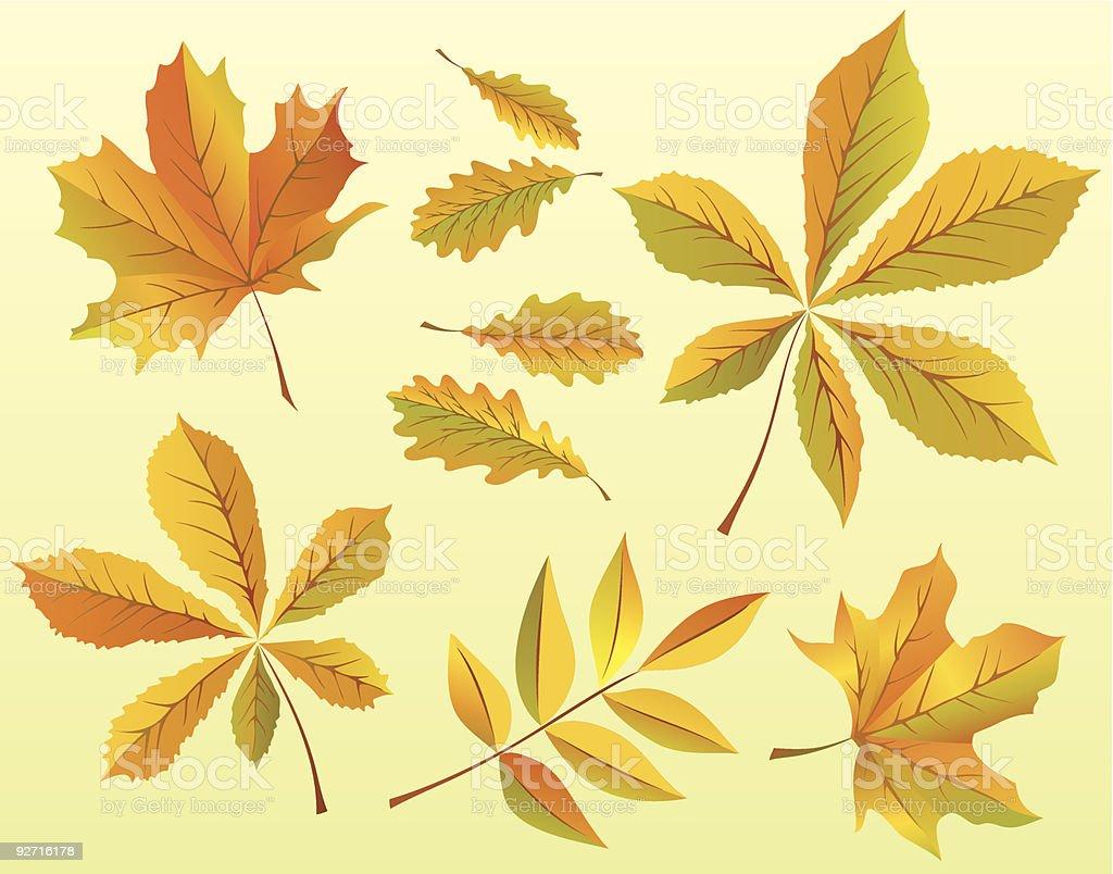 Autumn  leaves set 2 royalty-free stock vector art