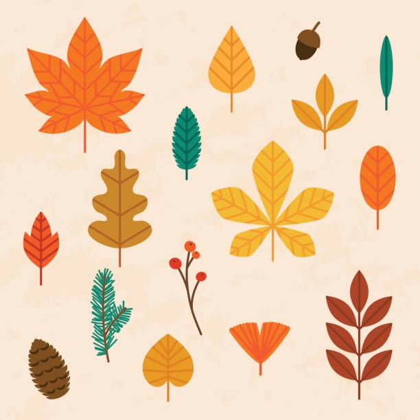 illustrazioni stock, clip art, cartoni animati e icone di tendenza di autumn leaves set. flat design modern vector illustration concept. - foglie