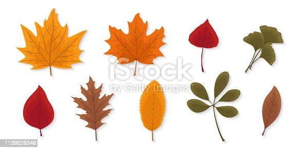 Autumn leaves set isolated on white background. Seasonal collection. Beautiful red, yellow and brown leaves. Modern realistic design. Flat style vector illustration.