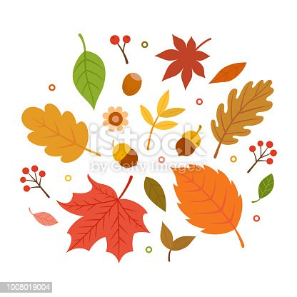 autumn,nature,leaf,acorn,maple,forest,tree,season,flower,decoration,icon,design,element