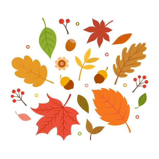 Autumn leaves set isolated on white background autumn,nature,leaf,acorn,maple,forest,tree,season,flower,decoration,icon,design,element fall leaves stock illustrations